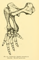 The Osteology of the Reptiles-183 dfgfde dfgfde.png