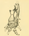 The Osteology of the Reptiles-186 ijhb juh jhg jh.png
