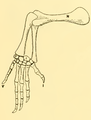 The Osteology of the Reptiles-191 kijhghg kjhgv t fr.png