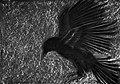 The Raven by Waithamai.jpg