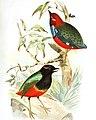 The birds of Australia (1890) (20196173310).jpg