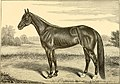 The breeds of live stock, and the principles of heredity (1887) (14594442959).jpg
