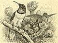The royal natural history (1893) (14784756025).jpg