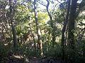 Theodore Roosevelt Nature Trail - panoramio (3).jpg