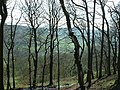 Through the woods to Shibden Dale - geograph.org.uk - 91595.jpg