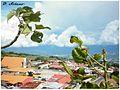 Tierra Blanca de Cartago 2014-01-31 04-23.jpeg