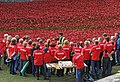 Tower Poppies Revisited (15327247847).jpg