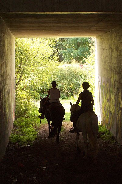 Chestertown Horseback Riding