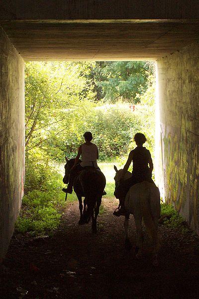 Chestertown Horseback Riding