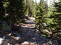 Trail to Laramie Peak.JPG