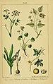 Traité pratique et raisonné des plantes médicinales indigènes (Pl. XV) (6459816793).jpg