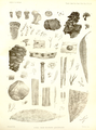 Transactions of the Linnean Society of London series 2 botany volume 2 plate 29.png