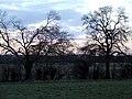 Trees bordering the field - geograph.org.uk - 126388.jpg