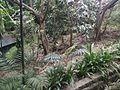 Trees of Bird Park KL.jpg