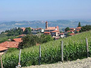 Barbaresco - A vineyard in Treiso