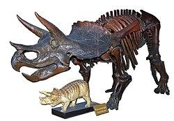 Triceratops-Zachi-Evenor-003.jpg