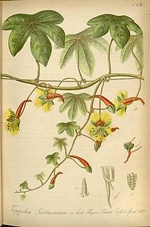 Gartenflora Wikipedia