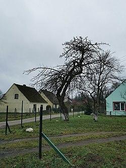 Troszki (3).jpg