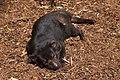 Trowunna Wildlife Park (6492459057).jpg