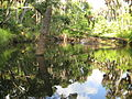 Turkey Creek Palm Bay Fl ckern.jpg
