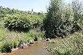 Uferböschung am Neckar.jpg
