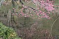 Ume Reflections Three (142022807).jpeg