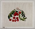 Unidentified, bright, cherry-red berries, with green Wellcome V0047149.jpg