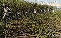 Untitled - Plantations (NBY 357).jpg