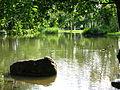 Uster - Stadtpark IMG 3555.jpg