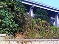 Viadotto Arena Sant'antonio.jpg