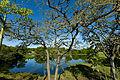 View of lake through trees.jpg