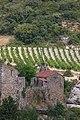 Vignoble sur coteaux à Minerve.jpg