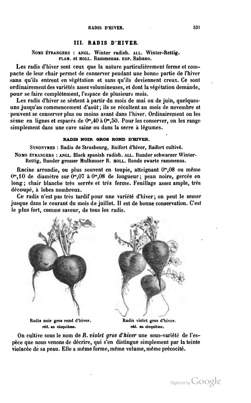page vilmorin andrieux les plantes potag res wikisource. Black Bedroom Furniture Sets. Home Design Ideas