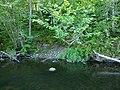 Vitrupes ieleja netālu no Brīdagas (Ķirbižu Upītes) 3.jpg