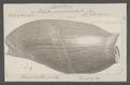 Voluta proboscidalis - - Print - Iconographia Zoologica - Special Collections University of Amsterdam - UBAINV0274 087 03 0018.tif