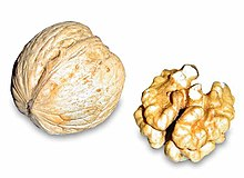 A walnut and a walnut core having been removed from the outer pithy fruit. Walnuts are not true nuts.