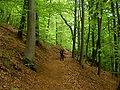 Waldweg in den Nordvogesen.jpg