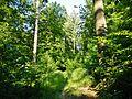 Wanderweg - panoramio (22).jpg