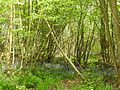 Wealden countryside 3201.JPG
