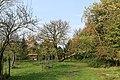 Weener - Hessepark - Hessepark + Cladrastis kentukea 02 ies.jpg