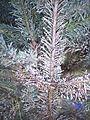 Weihnachtsbaum a4.JPG