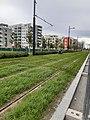 Wien Sonnwendviertel Verlaengerung LinieD Rasengleis 03.jpg