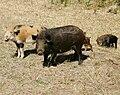 Wild hogs family.jpg