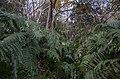 Wild place - panoramio.jpg