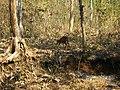 Wildlife's @ Bandipur Tiger Reserve - panoramio.jpg