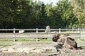 Wildpark Bruderhaus - panoramio (7).jpg
