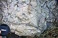 Winooski Dolomite (Middle Cambrian; Chimney Corner, Vermont, USA) 1.jpg