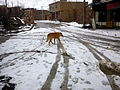 Winter and Snow in Bar,Nishapur 04.jpg