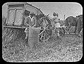 Women harvesting, Cowra Experiment Farm 1919 (25128313320).jpg