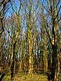 Wood Near Brieryside - geograph.org.uk - 297968.jpg
